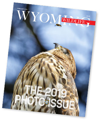 Wyoming Wildlife Photo Contest