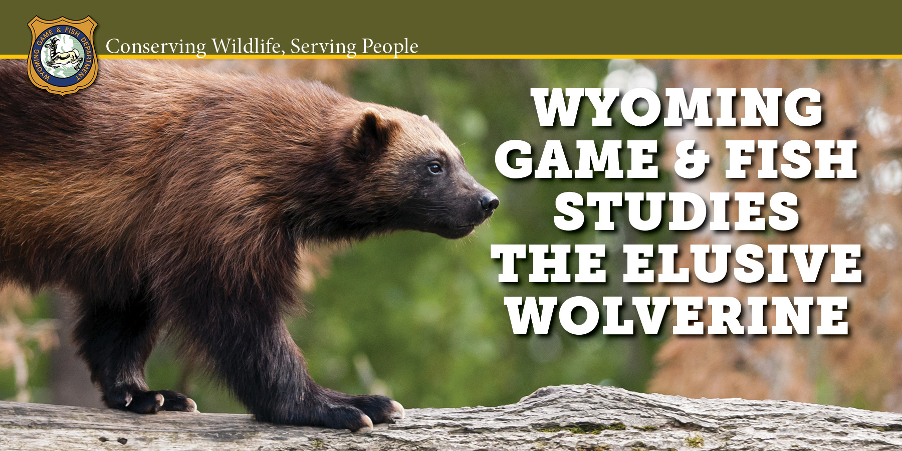Wyoming game and fish department wyoming wildlife magazine for Game and fish wy