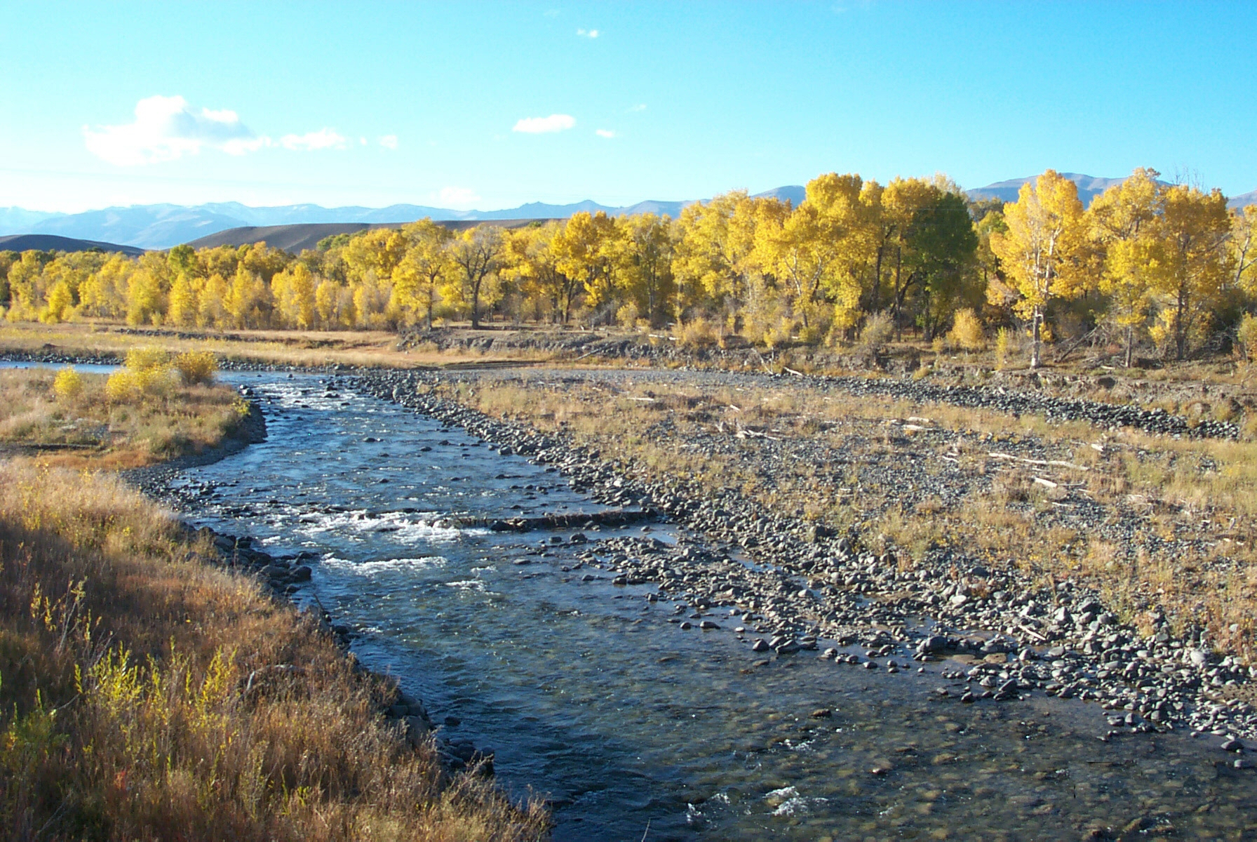 Wyoming game and fish department greybull river for Wyoming game and fish regulations