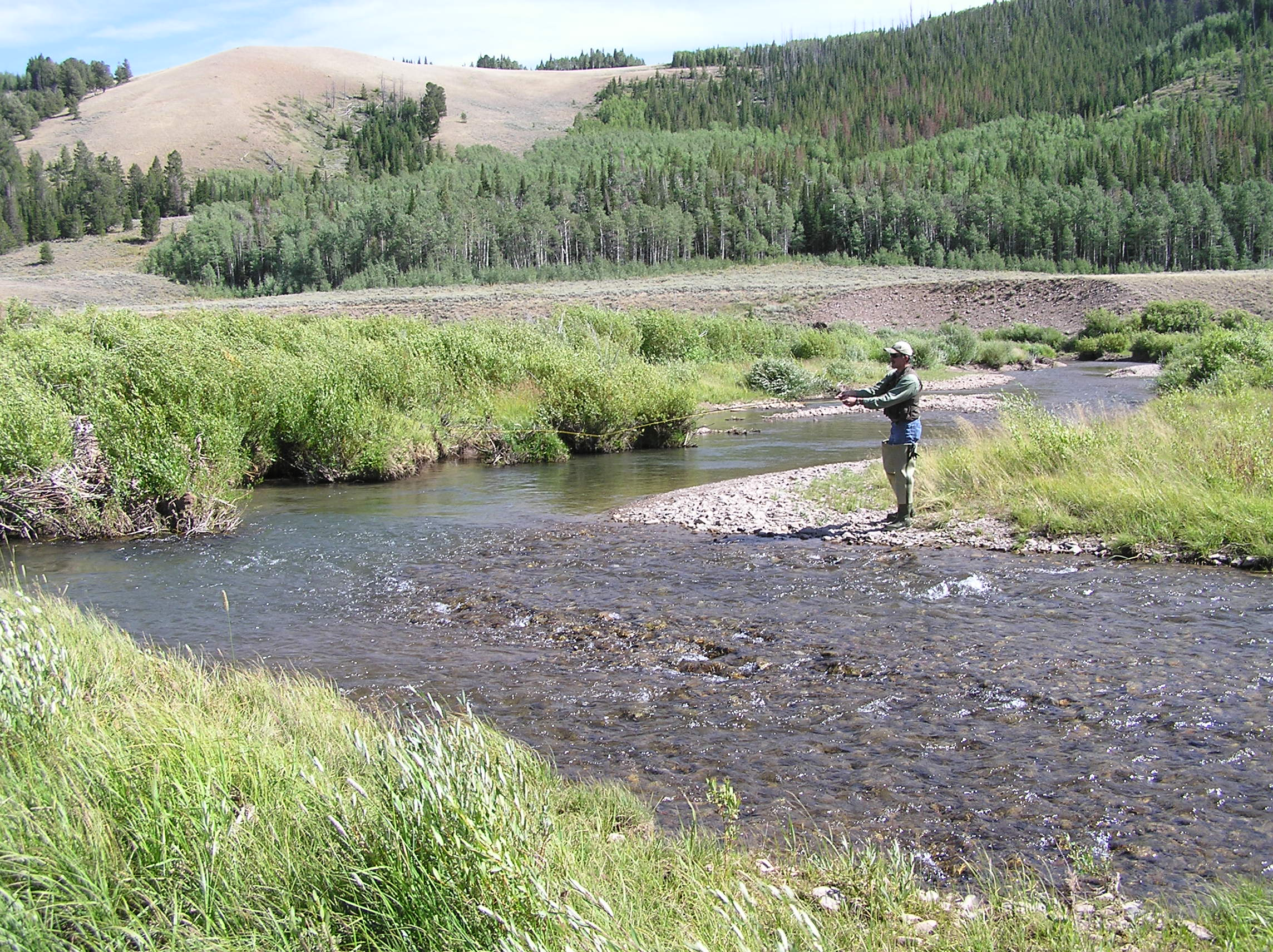 Wyoming game and fish department cottonwood creek south for Wyoming game and fish regulations