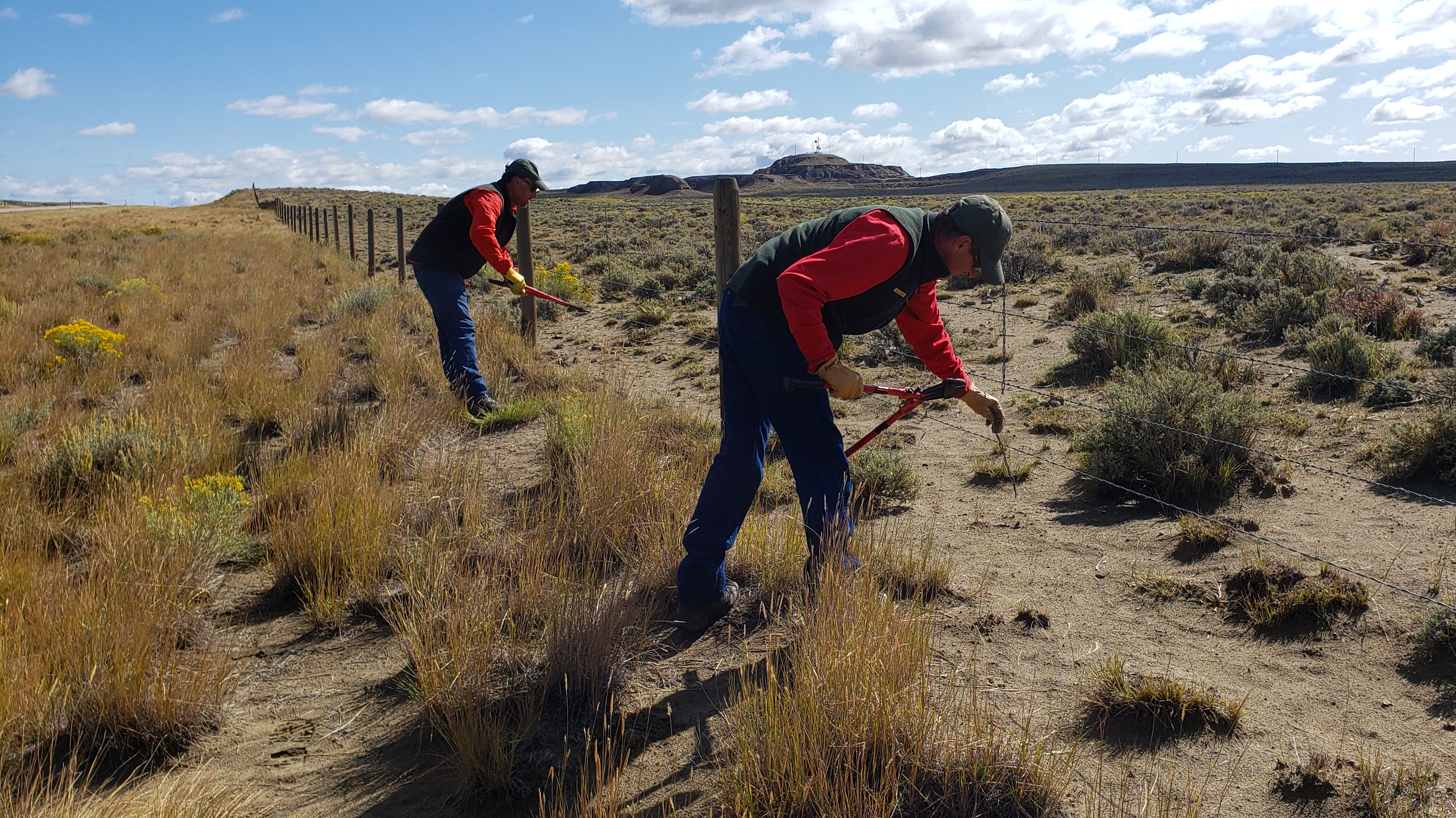 G&F Leads Effort to Facilitate Migrating Pronghorn