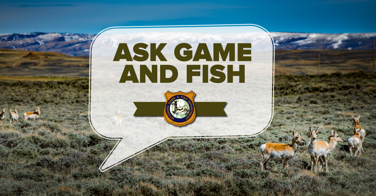 wyoming game and fish department ask game and fish