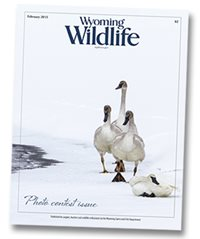 December 2013 Wyoming Wildlife Cover