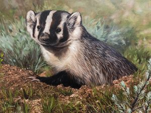Conservation Stamp To Feature Work From Another Wyoming Artist