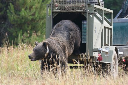 Wyoming game and fish department grizzly bear management for Wyoming game and fish regulations