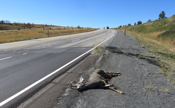 Game Wardens report an increased number of deer hit on the highway