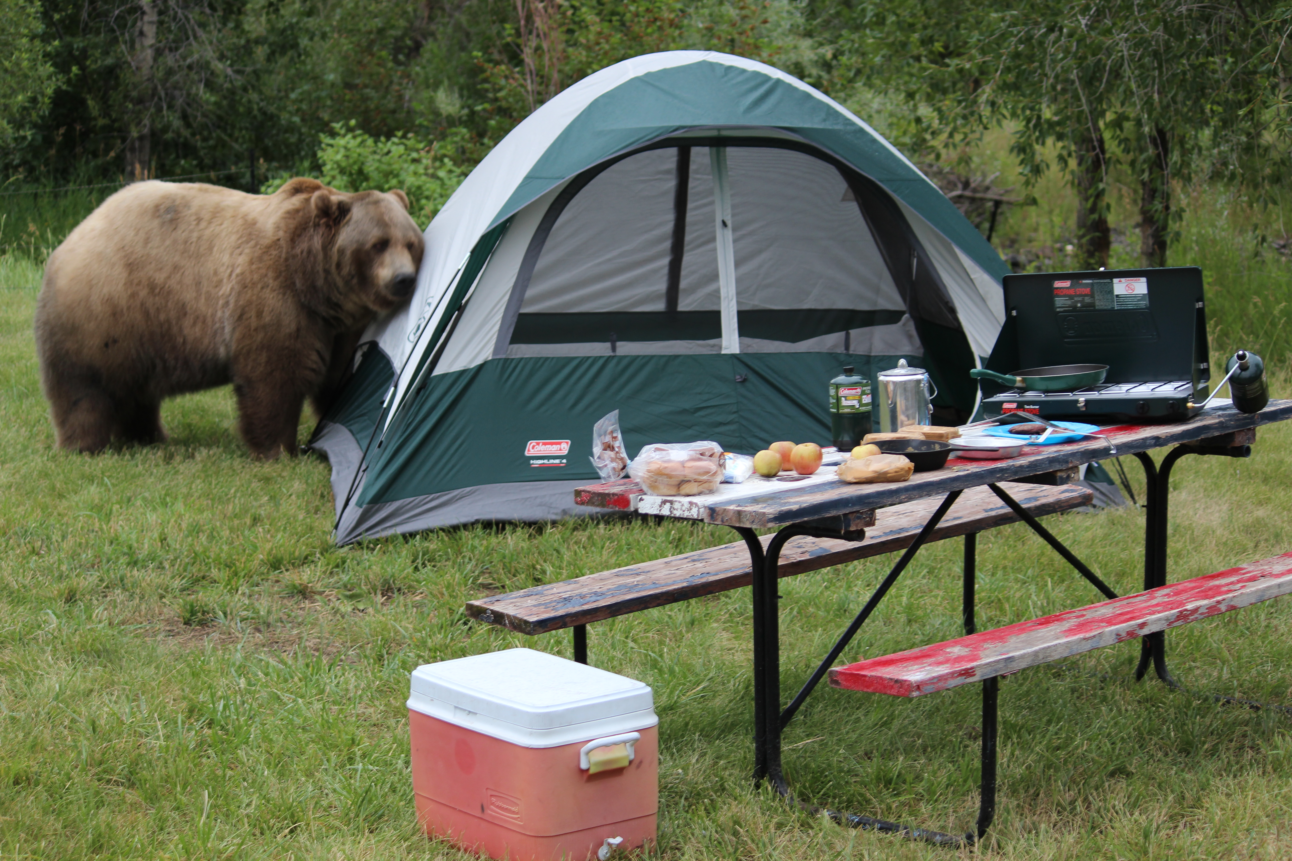 Never store attractants in your tent. & Wyoming Game and Fish Department - Bear Wise Wyoming