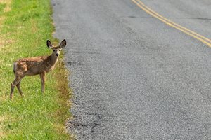 WYDOT receives $14.5 million federal grant for wildlife crossing project