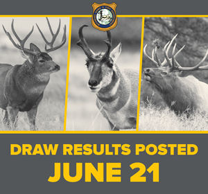 Wyoming Game and Fish Department - Big game license draw ...