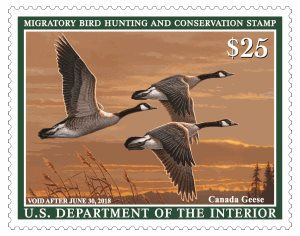 Duck And Goose Hunters Are Alerted The 2017 18 Migratory Waterfowl Hunting Conservation Stamp Or Federal Is Now Available At Post Offices