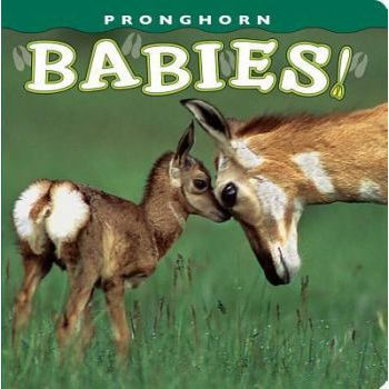 Pronghorn Babies Book