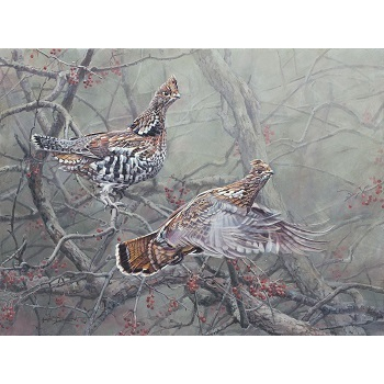 2014 Ruffed Grouse Print